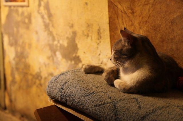 День кота вПетербурге отметят вЭрмитаже