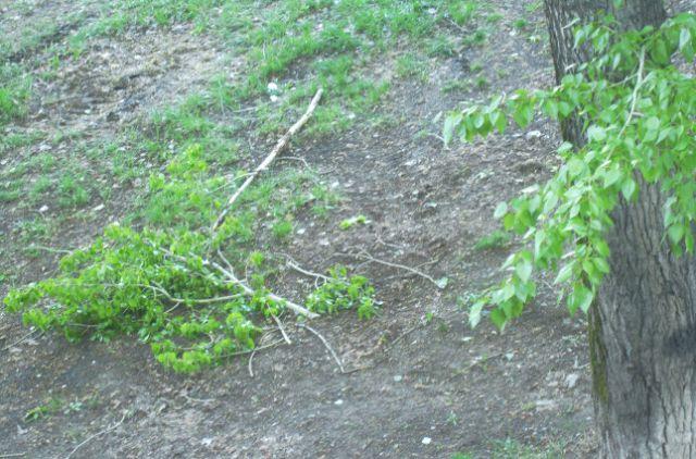 Из-за сильного ветра в Тюмени падали деревья и перевернулся детский батут
