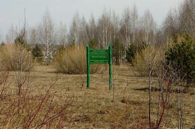 На Ямале действуют семь школьных лесничеств.