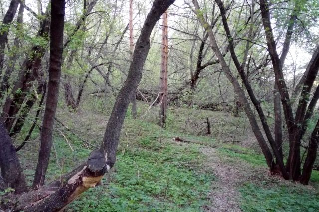 Девочки прятались в лесу от стражей порядка, зная, что их ищут.