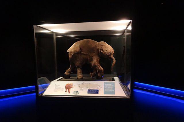 Ямальский мамонтенок отмечает 10-летний юбилей.