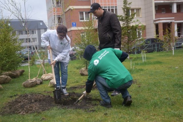 Всего в этом году планируется высадить в краевом центре 1000 деревьев.