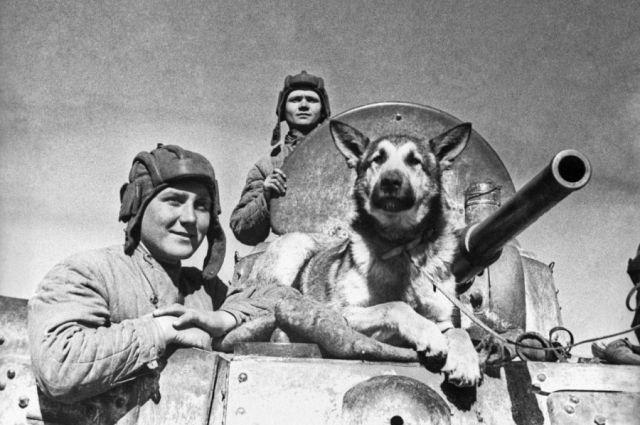 Собаки на фронте.