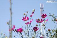 Летом в Тюмени появятся «цветочное пианино» и невиданные доселе растения
