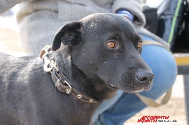 Нетрезвый водитель  утверждал, что за рулем иномарки сидел его пес.