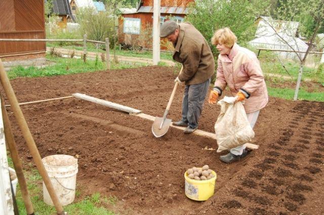 Проверить готовность почвы можно старым дедовским методом: погрузите руку в землю на 10 см.