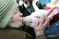 Близкие «отношения» со свининой могут привести к серьёзным последствиям.