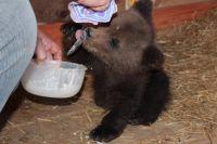 Медвежонок уже поправился