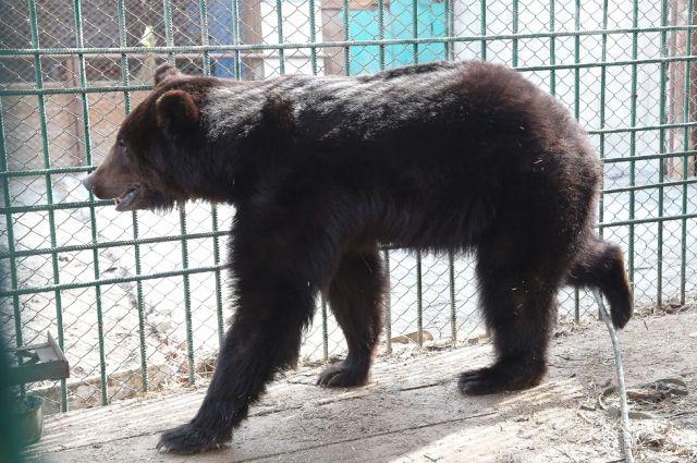 Боец ММА Джефф Монсон собирается разводить медведей под Тюменью