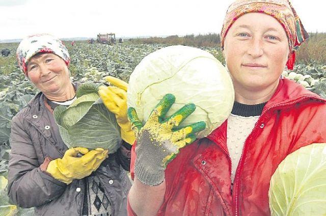 Агрономы считают, что в умелых руках на Южном Урале растёт всё и в жару, и в холод.