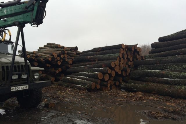 Липчанина осудили завырубку 150 дубов вВоронежской области