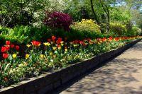 Тюменцев приглашают принять участие в фестивале цветников