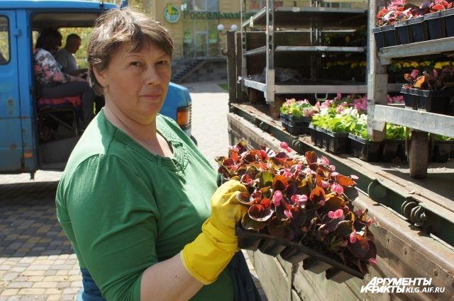 Более 400 тысяч летних цветов высадят на клумбах Калининграда.