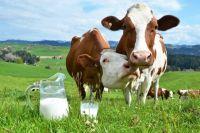 Правительство намерено запретить продажу «домашнего молока»