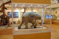 Посетители главного ямальского музея встретятся с мамонтенком.