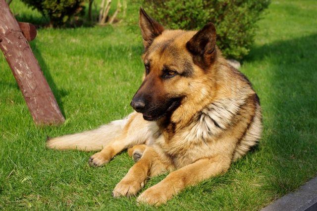 Насотрудницу тобольской милиции  натравили собаку