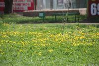 С каждым годом в Челябинске всё меньше зелени и цветов.