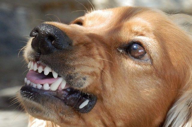 ВВоронеже бездомная собачка напала натроих детей