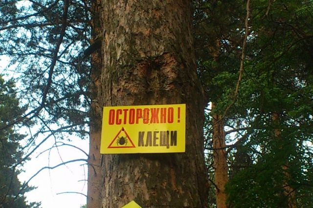 ВБашкирии отукусов клещей пострадали практически 2000 человек