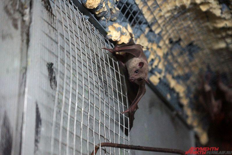 Посетители могли посмотреть на жизнь ночных животных, например, летучих мышей.