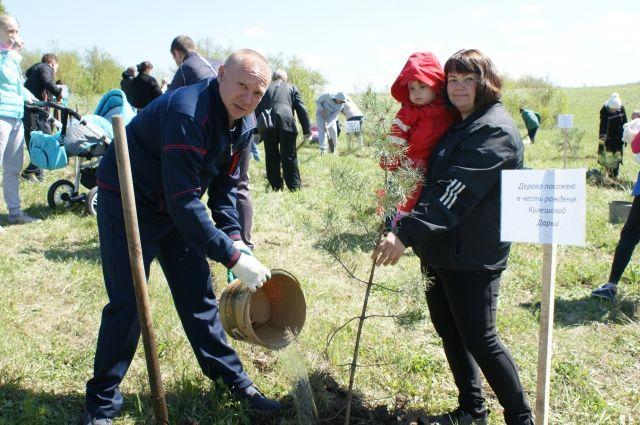 В Кемеровской области прошел единый день посадки деревьев.