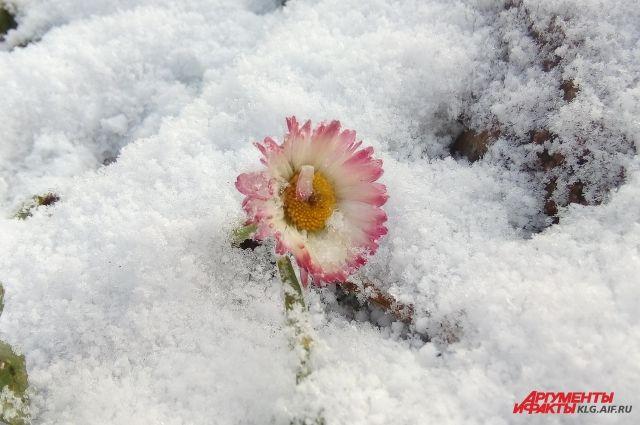 ВНижегородской области ожидаются заморозки— Экстренное предупреждение