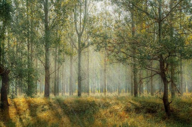 Пустырь в Тюменском районе превратится в лес с 35-ю тысячами сосен