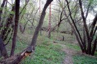 Узнав, что его ищут, мужчина расстроился и снова ушёл в лес.