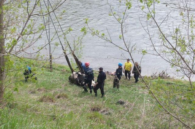 Под Кунгуром корову эвакуировали сберега реки краном