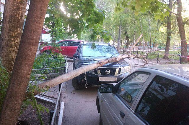 Дерево на машине. Что делать, если на авто упало зеленое насаждение?