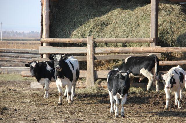 Деньги фермеру выделили как жителю сельской местности в качестве социальной выплаты в рамках федеральной целевой программы.