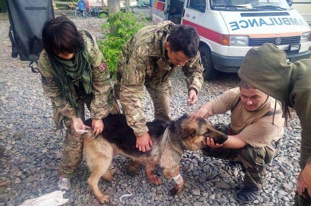 Собака прикрыла собой двух бойцов АТО вовремя обстрела