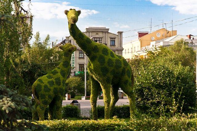 «Зеленых» жирафы можно встретит в сквере Сурикова.