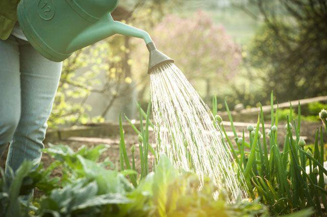 Как нужно поливать разные виды овощей?
