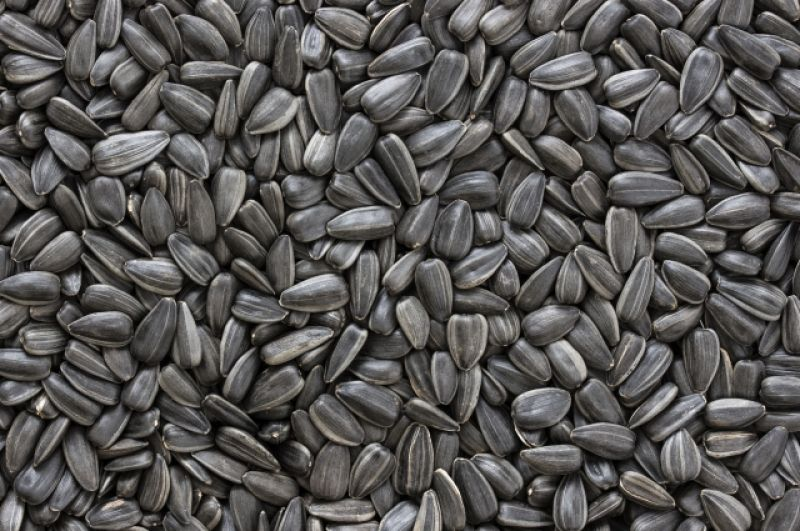 Семечки. В семенах подсолнечника содержится 578 Ккал, а в тыквенных «всего» 556. Это все относится к не соленым семечкам.