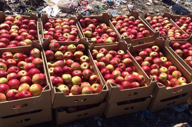 58 тонн яблок раздавили насвалке вСебеже