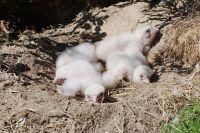 На Ямале исследователи помогут птицам решить «жилищный вопрос».