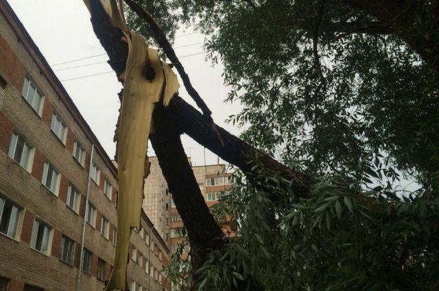 Циклон в столице России принес треть месячной нормы осадков