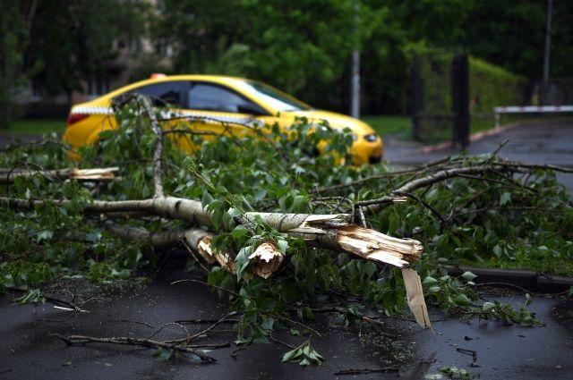 В столице России бушевал циклон