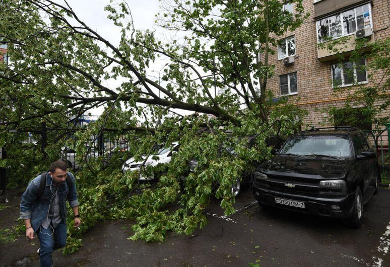 Сломанное ураганом дерево во дворе жилого дома в Москве.
