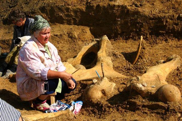 Более полувека Анна Швырева изучает кости древних животных.