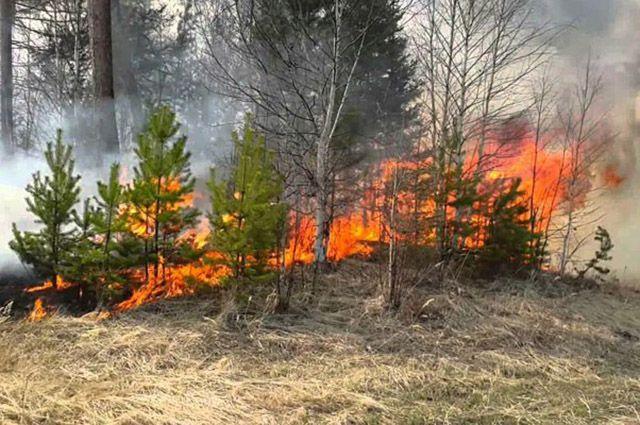 На Ямале выберут лучшего лесного пожарного.