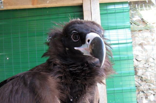 Самой крупной птице нужна большая помощь.