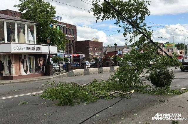 Из-за сильных порывов ветра в Калининграде падают деревья.