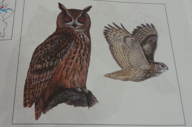Сведенья о популяции обитающих в Пензенской области редких видов животных и птиц необходимо обновить.