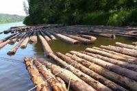 Всего экспорт древесины идёт в 50 стран мира.