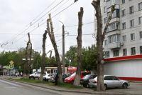 Челябинск, ул. Румянцева: деревья после обрезки похожи на чудовищ без головы.
