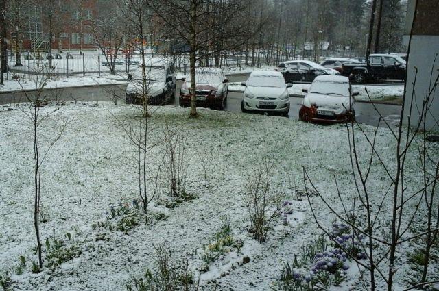 1 июня в Костомукше выпал снег
