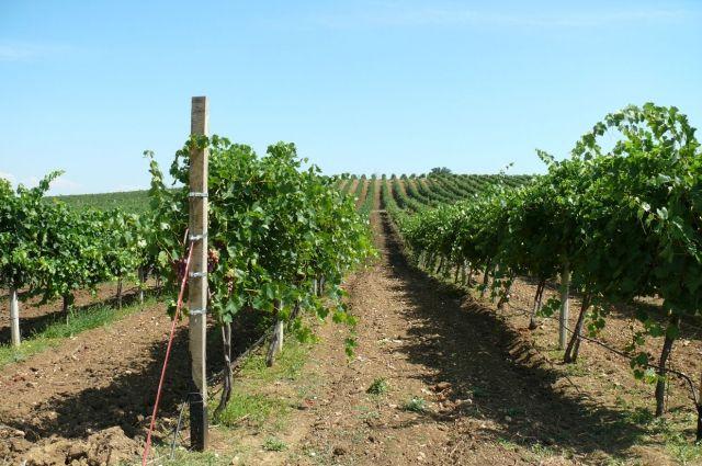 ВДагестане установлено 1 тыс. 125 гектаров новых садов