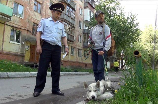 Тюменские полицейские вернули инвалиду украденного голубоглазого хаски